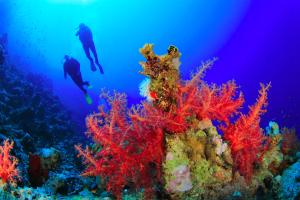 Tauchsafari Korallen