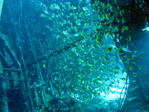 glassfish im Wrack